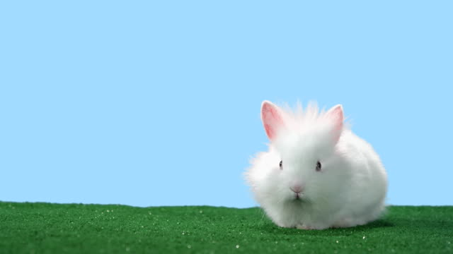 Tired bunny stops to rest. video