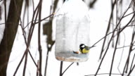 Titmouse birds at birdhouse video