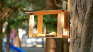 titmouse eats in the birdhouse video
