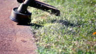 To mow a lawn with a trimmer. video