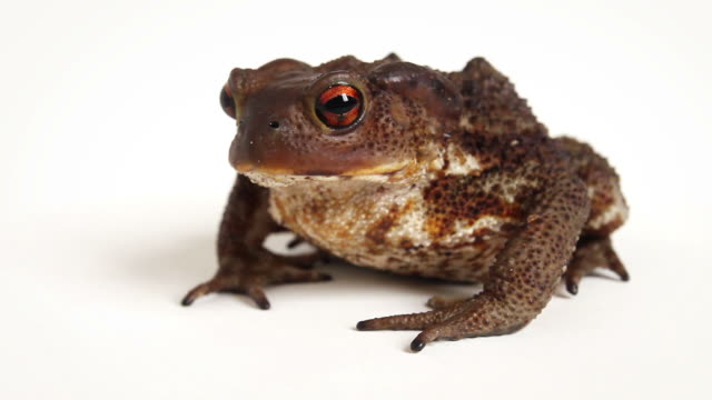 Toad's Face Zoom Out Video video