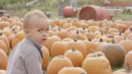 Toddler playing and sitting in a pumpkin patch video