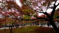 Tofukuji Temple in autumn season video