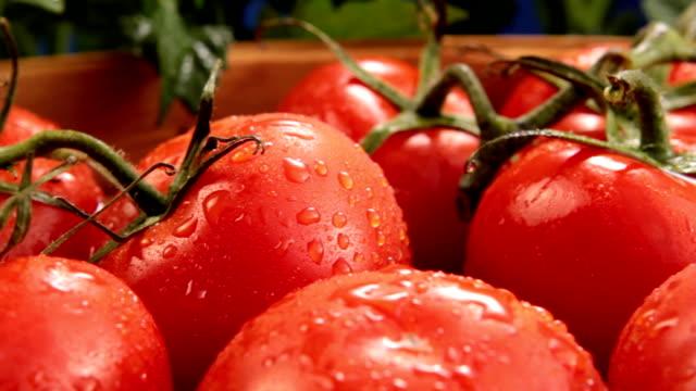 Tomato on the vine video