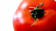 Tomato (HD) video
