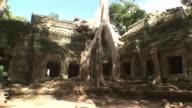 tomb raider temple video