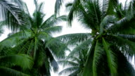 Top of coconut palm on sky background video