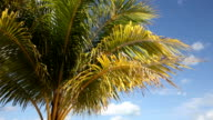 Top of coconut palm tree on sky background video