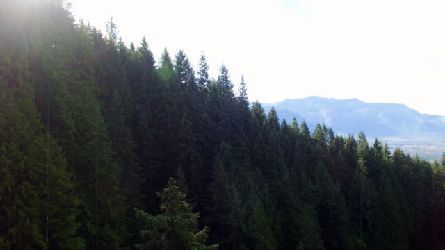 Top of Pine Tree Mountain Forest Pacific Northwest video