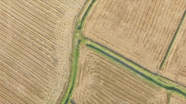 Top view of endless harvested field video