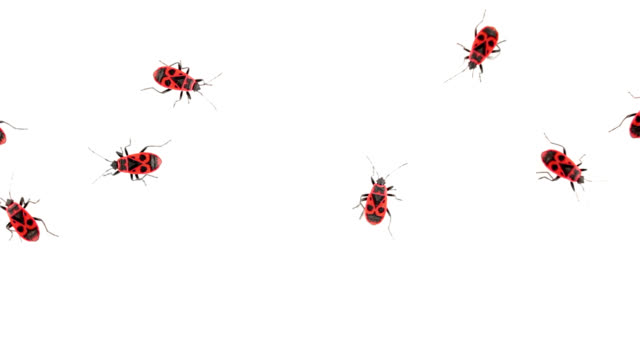 Top view of Firebugs walking around video
