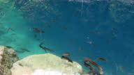 top view of fishes swimming in water at unser waterfall video