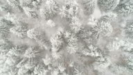 Top view of the spruce trees in snow covered in the forest video