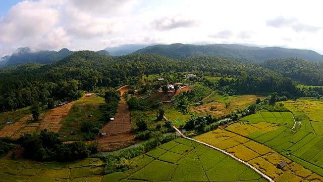 Top view Paddy field video