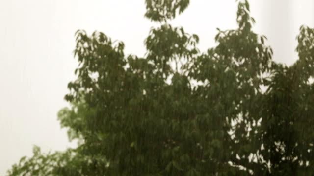 Torrential Rain video