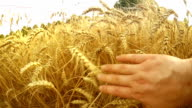 Touching The Harvest video
