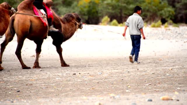 tourist camel riding pass video
