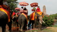 Tourist group rides on the backs of elephants video