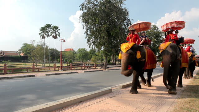Tourist group rides through the city on elephants video