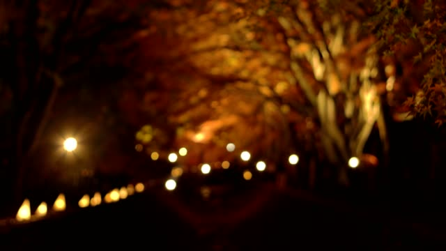 tourist visiting maple corridor or momiji tunnel at autumn night in Kawaguchiko,Yamanashi, Japan video