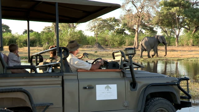 Tourists on game drive vehicle viewing an elephant,Botswana video