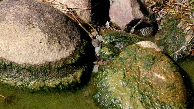 Toxic Algae Close Ups video