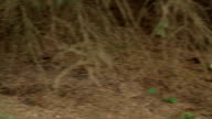 Toxic Wild Mushrooms video