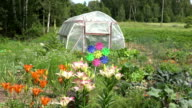 Toy windmill between lilies in the garden video