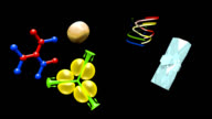 Trace elements and vitamins video