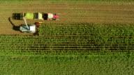 HD: Tracking Aerial Shot Of Harvesting Corn video
