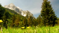 Tracking meadow in the mountains on sunny day. video