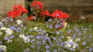 Tracking Shot Along Flowers at St.Peter's Church video