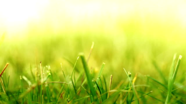 Tracking shot of Grass. HD video