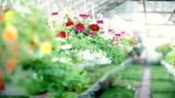 Tracking shot on flower plant video