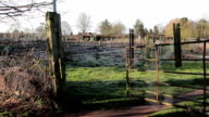 Tracking Show through gate of Allotment - Rural Village / Town Scenes - Beautiful Morning Light video