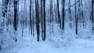 Tracking Stabilized shot through snowy oak forest trees in winter video