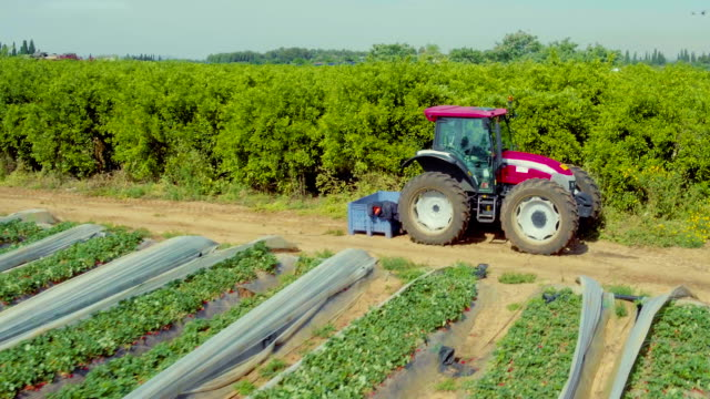 Tractor at strawberry field. Aerial view video