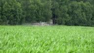 Tractor spray fertilize maize corn field with pesticide near forest. FullHD video