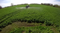 Tractor spray fertilize rapeseed field with insecticide herbicide chemicals video