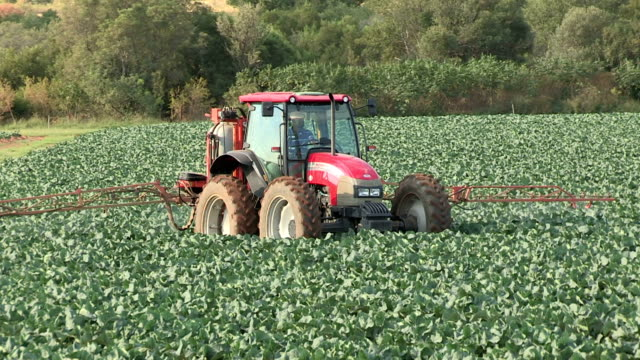 Tractor spraying pesticides on vegetables, South Africa video