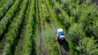 Tractor spraying plum trees video
