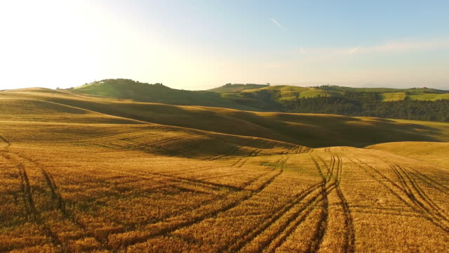 AERIAL Tractor tracks in wheat field video