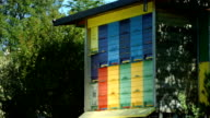 HD: Traditional Painted Wooden Beehive video