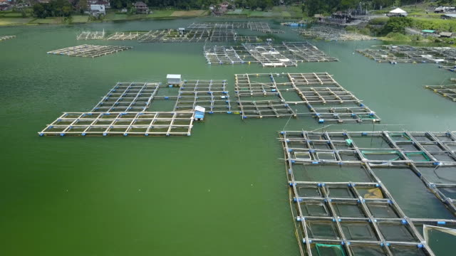 AERIAL: Traditional village and aquacultural farm with square fish cages in Bali video