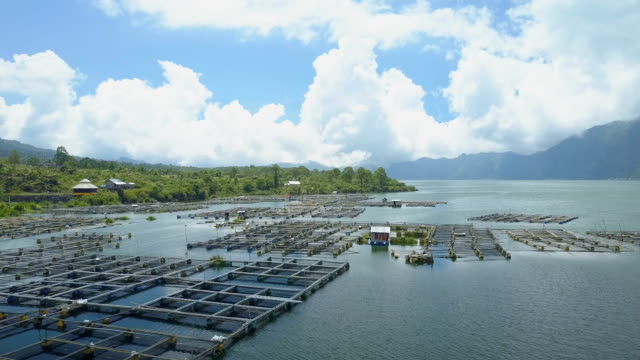 AERIAL Traditional village and cage farming fish farm in scenic Lake Batur, Bali video