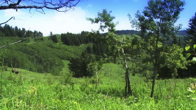 Trail riding on horseback video