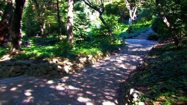 Trails of the park, trees, bushes, thickets. STEADYCAM shot. video