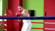 Training boxer video