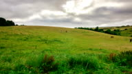 Tranquil Timelapse Nature cloudscape with horses on green grassy hill video