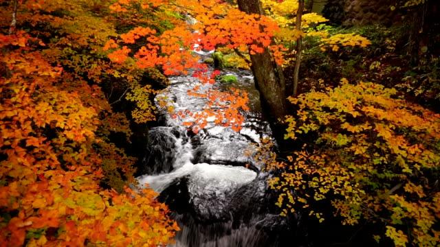 Tranquil water flow from Ryuzu waterfall in autumn, Nikko, Japan video